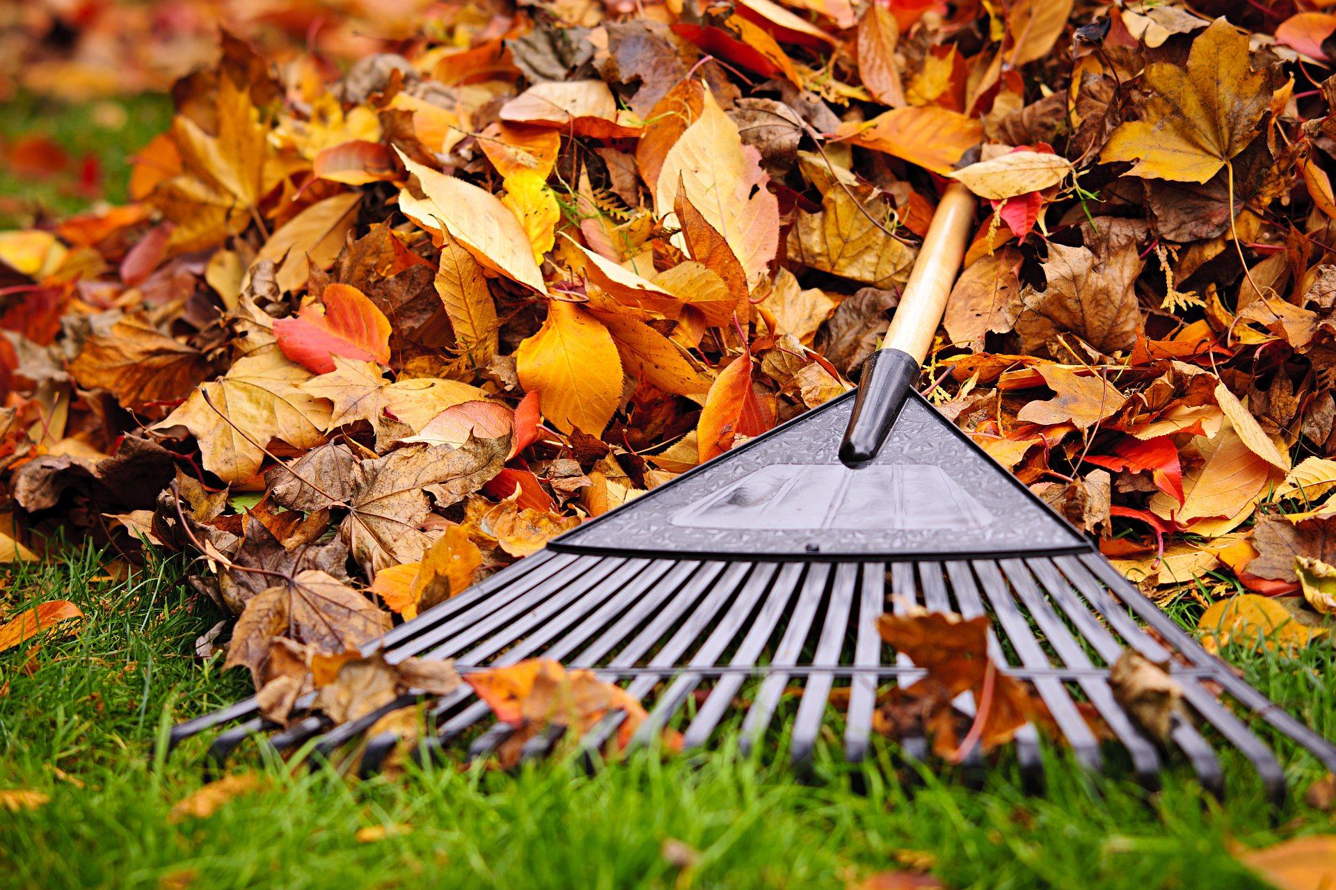 Seth_Maurer_Landscaping_Spring_Fall_Cleanup_1920px